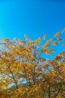 14.10.2018 HerbstÄktschn der Jungschar_2